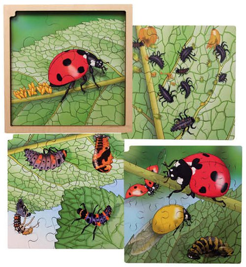 Life cycle puzzel OLH-beestje