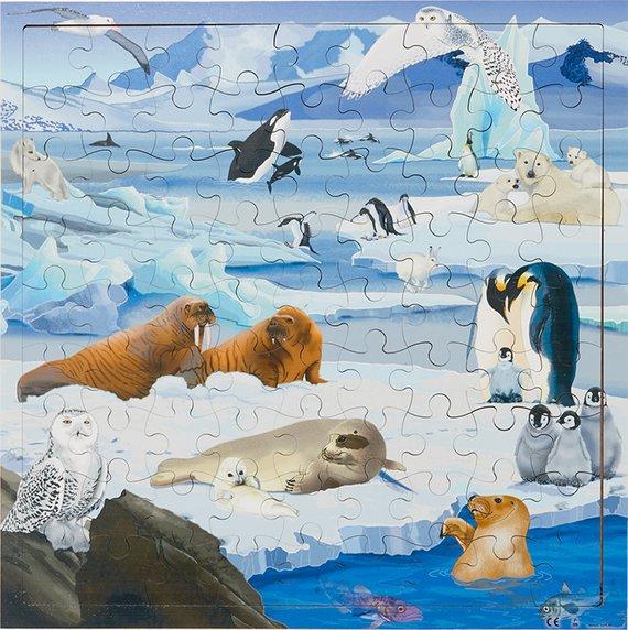Puzzle Interaktiv Polargebiete