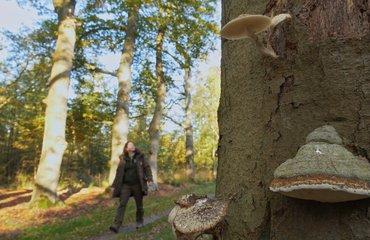 Anja Koning in herfstbos