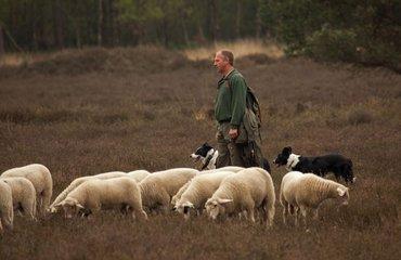 Wandelen met de boswachter, thema: op bezoek bij de schaapsherder, Loenermark