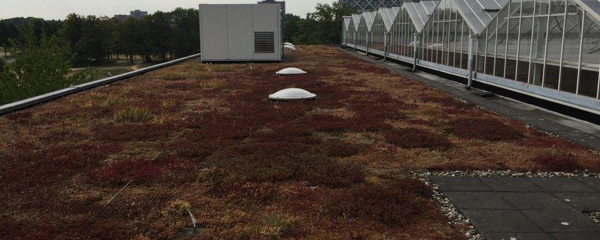 Sedum dak op de campus van Wageningen University, juli 2018