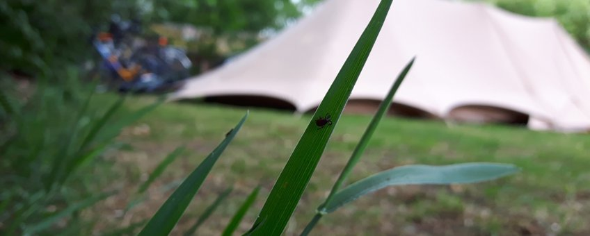 Teken op grassprietten, tent camping