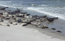 zeehonden_op_strand