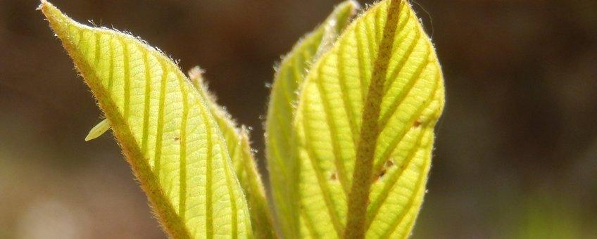 eitje citroenvlinder - primair