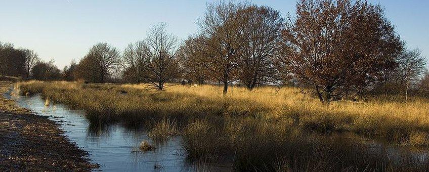 Bargerveen, hoogveen,  Creative Commons-licentie Naamsvermelding-Gelijk delen 3.0 Unported