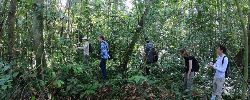 Op onderzoek in het tropisch regenwoud