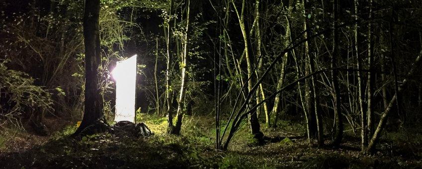 nachtvlinderen Brabant - primair