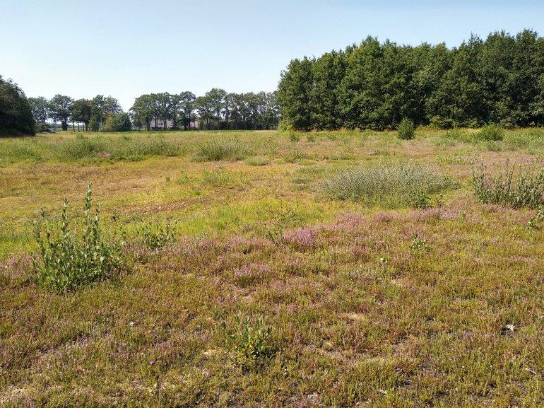 In augustus 2020 bezaten grote oppervlakten in de laagste delen van de Heidenhoekse Vloed (Gelderse Achterhoek) geen vegetatie meer. De pioniervegetatie die hier normaliter staat, kwam de afgelopen droge jaren niet meer tot ontwikkeling. De droogte stimuleerde boomopslag