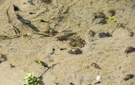 Klein watertje met onder andere waterlopers, kikkervisjes, zoetwaterslakken en een libellenlarve