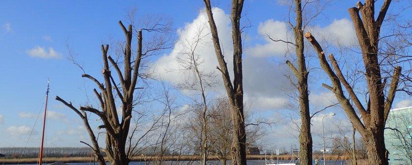 Gekandelaberde bomen