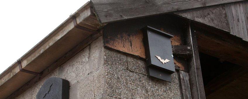 Opgehangen vleermuiskasten