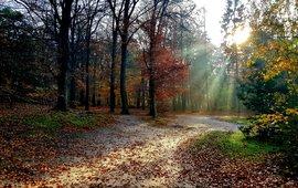 Herfst in Utrechts bos