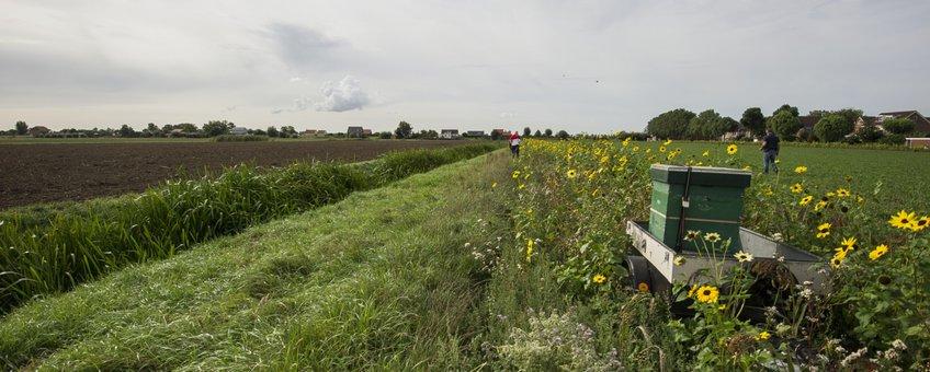 Bijenkast bij bloemrijke akkerrand Hoeksche Waard