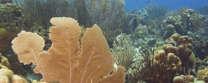 Koraalrif bij Bonaire (eenmalig gebruik voor dit WUR nieuwsbericht)