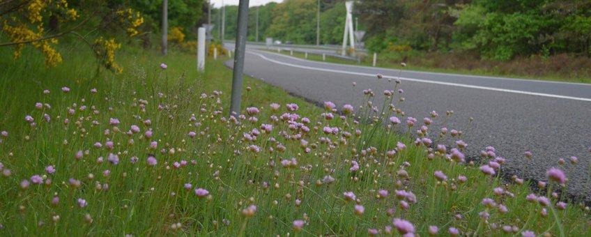 Engels gras langs de A50