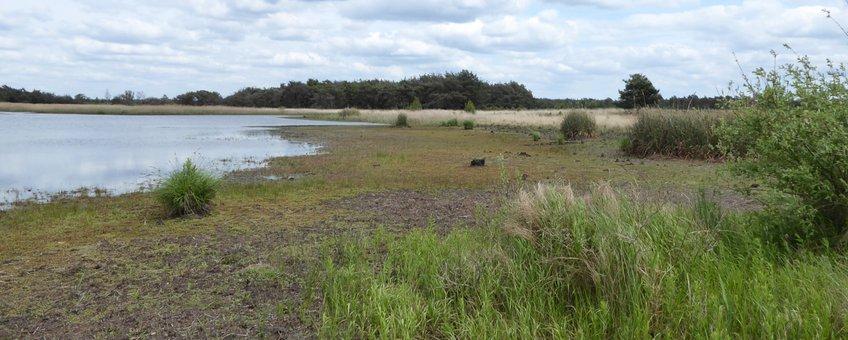 Habitat speerwaterjuffer
