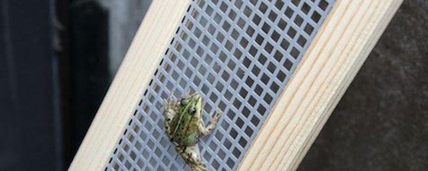 Groene kikker klimt dankzij kikkertrap uit de put