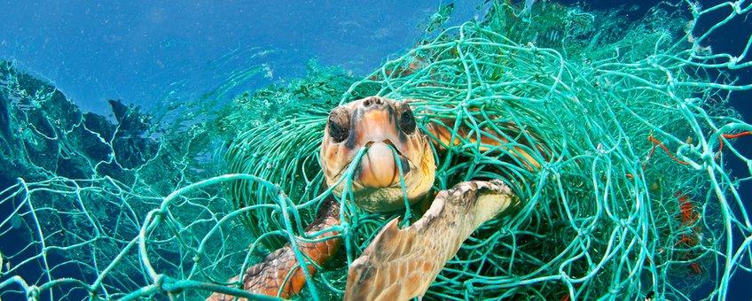 Zeeschildpad verstrikt in een visnet