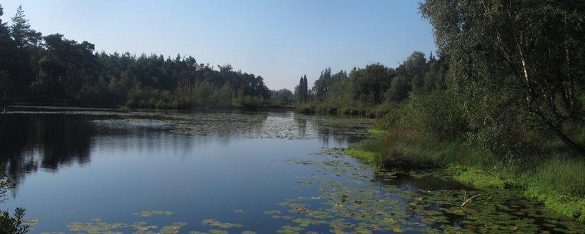 Verlanding in Venrode-Midden