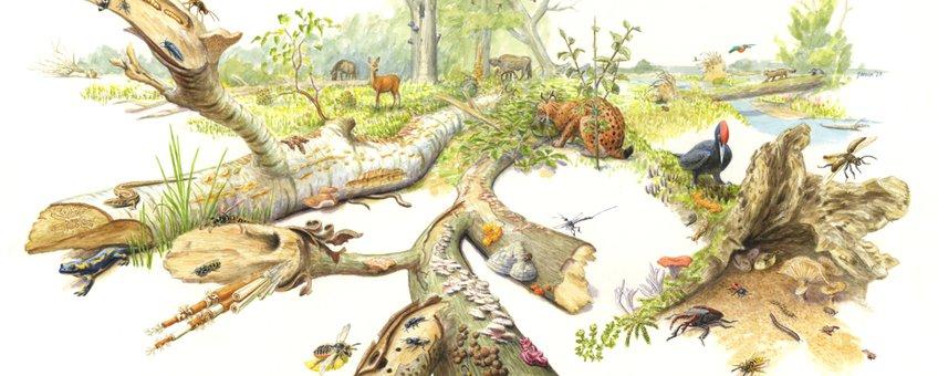 De sleutelrol van dood hout in de natuur
