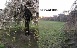 Verschil tussen ontwikkeling sierkers half maart 2020 en half maart 2021