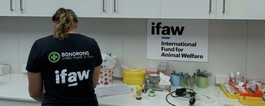 Door IFAW gesponsorde dierenarts in het Bonorong Wildlife Hospital