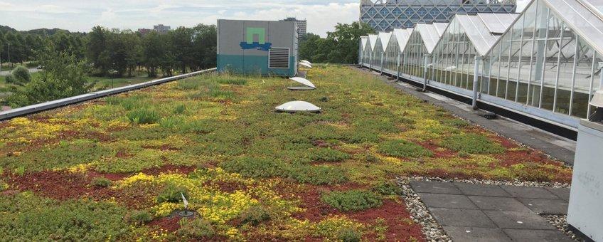 Groendak op een gebouw van Wageningen Environmental Research