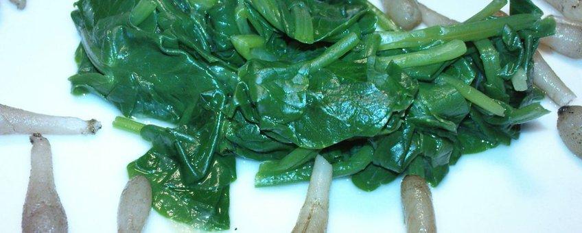 Speenkruid, een vroege bron van Vitamine C en koolhydraten voor de 'primitieve kok'