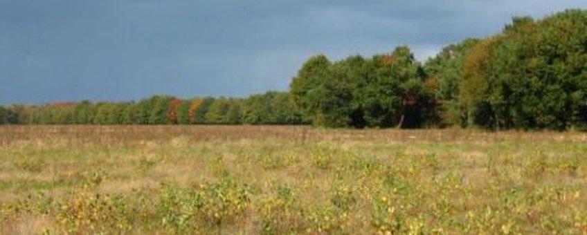 Maashorst grasland Melman