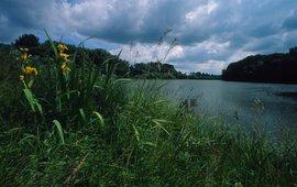 Danube floodplain