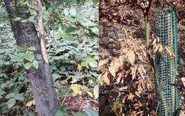 Wildbescherming jonge bomen - bijgesneden
