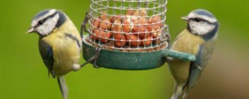 Pimpelmeesjes op voederkast