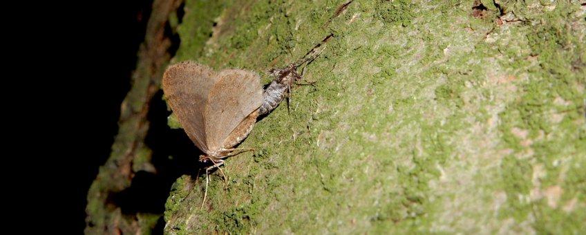 kleine wintervlinder - primair