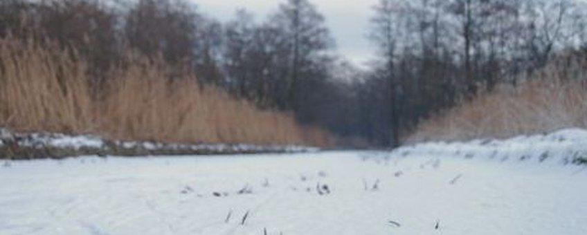 Krabbenscheersloot in winter Foto: Wout van der Slikke