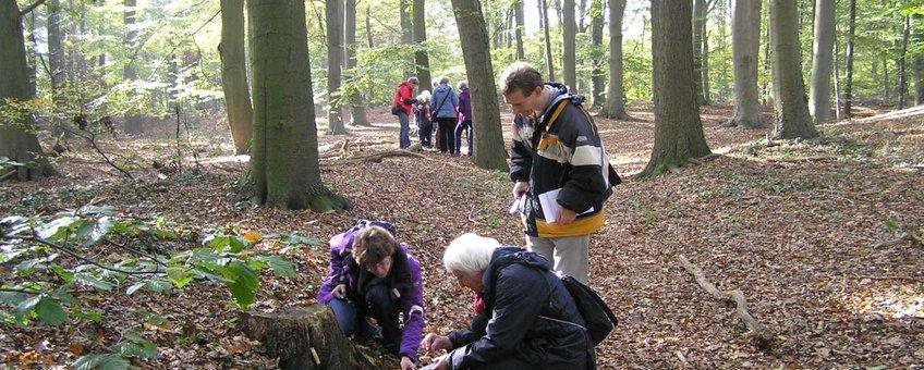Inventariseren van paddenstoelen op de Wagenignse berg door de KNNV afdeling Wageningen en omstreken