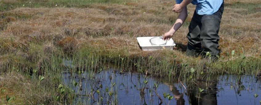 Bemonstering van watermacrofauna in een randzone van hoogveen met Waterdrieblad