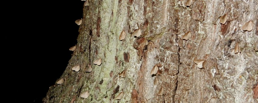 Veel kleine wintervlinders - primair