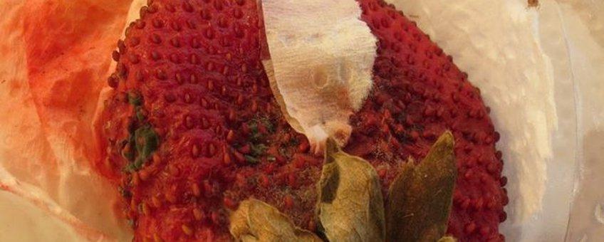 Aangetaste aardbei door Aziatische fruitvlieg. Ingedeukt