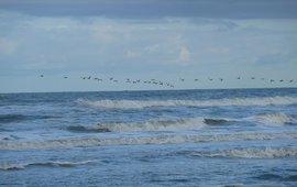 Vogeltrek boven de Noordzee