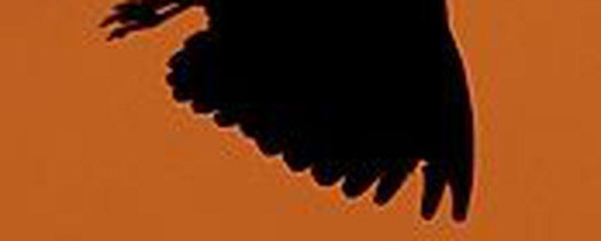Kievit silhouet; vierkant