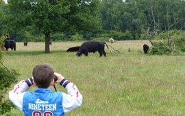 Kijken naar grote grazers EENMALIG GEBRUIK