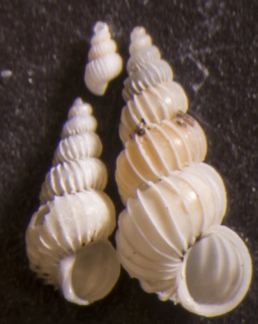 Witte wenteltrappen uit het aanspoelsel op het strand bij Westenschouwen
