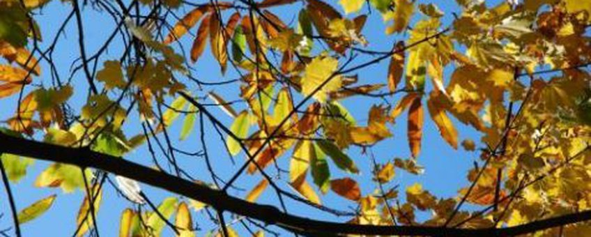 Herfstkleuren Foto: Wout van der Slikke
