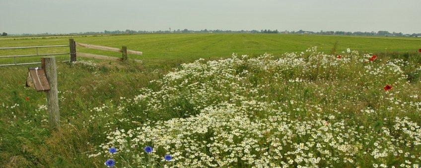 Graslandbeheer Friesland - primair