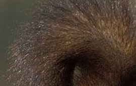 uitsnede eekhoorn ROLLIN VERLINDE