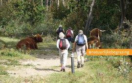 Wandelaars en Schotse hooglanders EENMALIG GEBRUIK