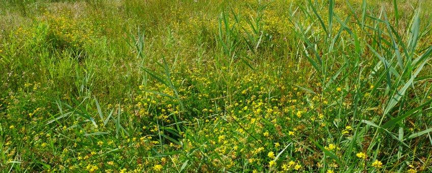 Nat grasland met moerasrolklaver