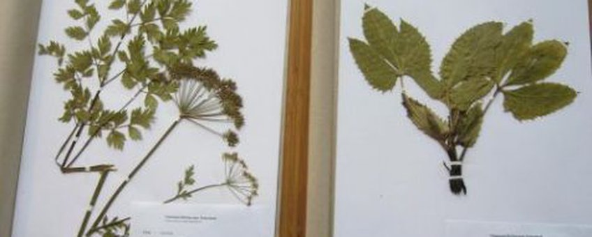 Herbariummateriaal Foto: Theo Peterbroers