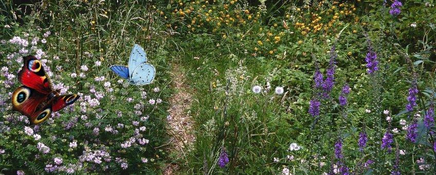 vlindertuin - primair