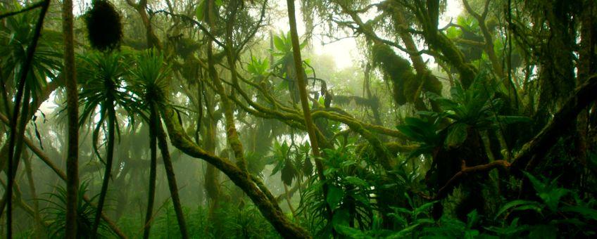 Afrikaans regenwoud